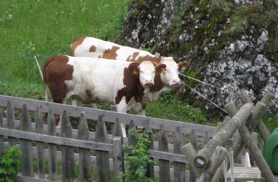 fattoria-durnmueller-siusi-a-sciliar-dolomiti  (3)